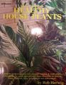 How to Grow Healthy House Plants