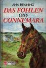 Das Fohlen aus Connemara