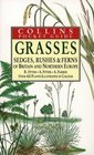 Grasses Sedges Rushes and Fern of Britain  Northern Europe