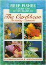 Photographic Guide to Reef Fishes Corals and Invertebrates of the Caribbean Including Bermuda