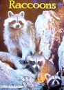 Raccoons (Books for Young Explorers)