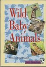 Wild Baby Animals