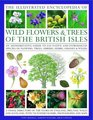 The Illustrated Encyclopedia of Wild Flowers  Trees of the British Isles An authoritative guide to 650 native and introduced species of flowers trees shrubs herbs grasses  weeds