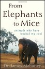From Elephants to Mice Animals Who Have Touched My Soul