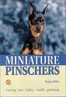 Miniature Pinschers (KW)