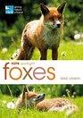 RSPB Spotlight Foxes