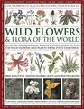 The Complete Illustrated Encyclopedia of Wild Flowers and Flora of the World An Expert Reference And Identification Guide To Over 1730 Wild Flowers  Beautiful Watercolours Maps And Photographs