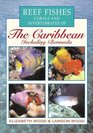 Reef Fishes Corals and Invertebrates of the Caribbean  A Diver's Guide